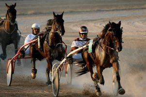 trotting_races