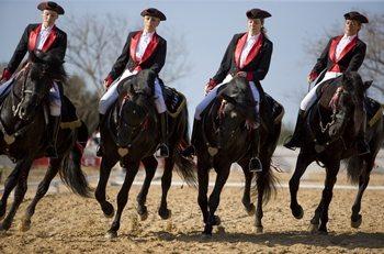 Menorcan_Horses_Dressage
