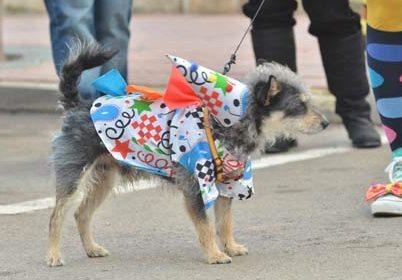 Carnival_Dog